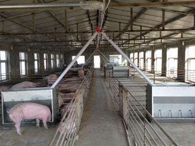日照康盛养猪场