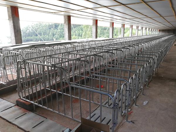福建仙游猪场