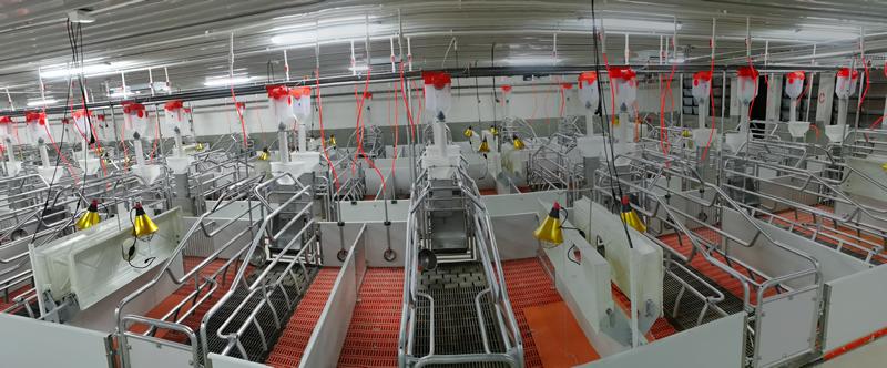 湖南常德2400头自繁自养母猪场