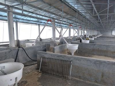 珠海猪场安装料线