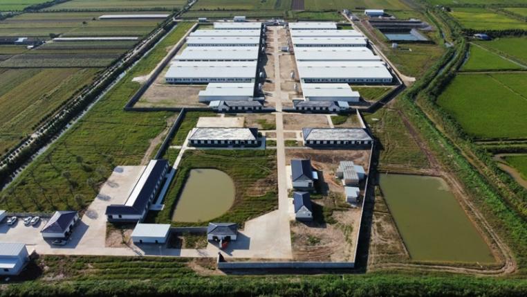 湖北4800头母猪场交工验收
