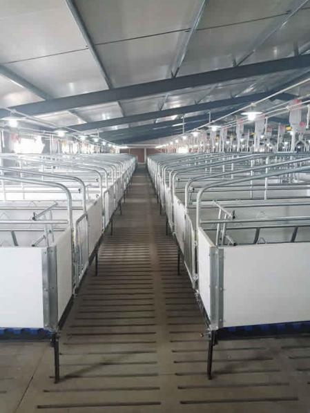 欧式产床猪场安装实例