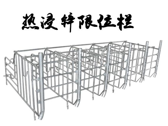 热侵锌母猪限位栏