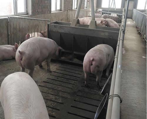 猪食槽11.jpg